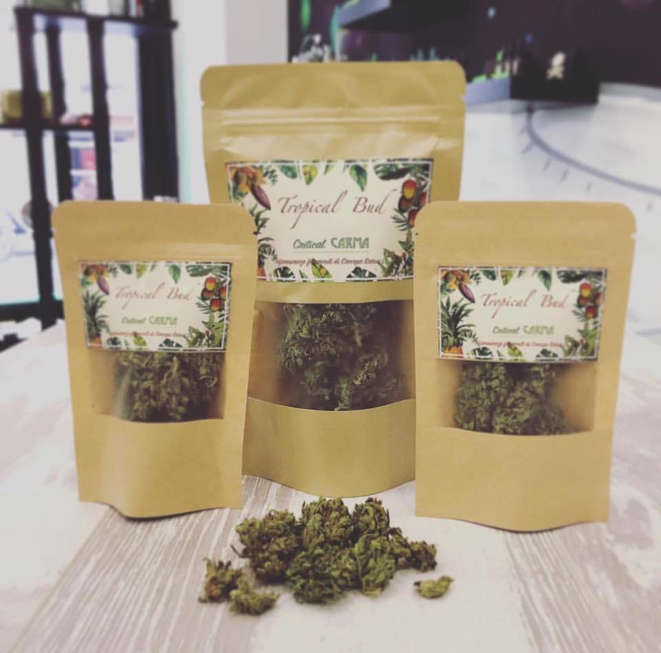 cannabis store firenze